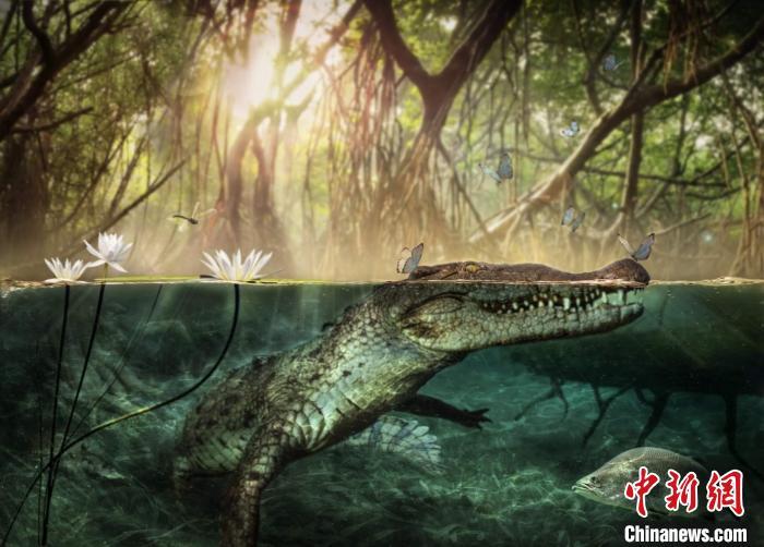 鳄鱼可能在1100万-500万年前从非洲迁移到美洲