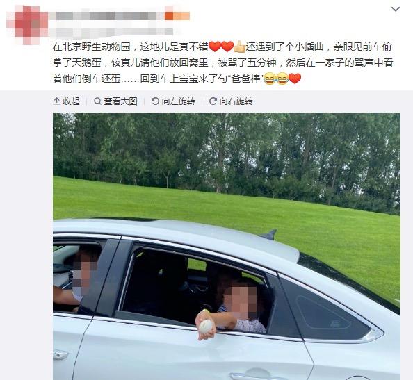 动物园 游客偷拿天鹅蛋,北京野生动物园回应:深感遗憾