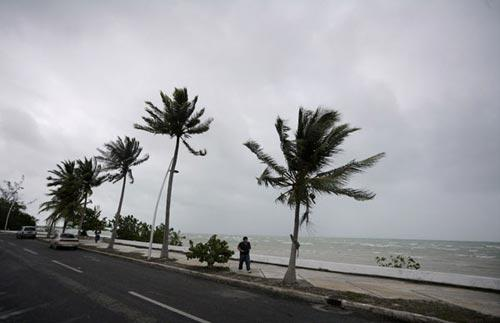 Palm trees move in the wind as a man walks on the shore in Chetumal June 26, 2010. (Xinhua/Reuters Photo)