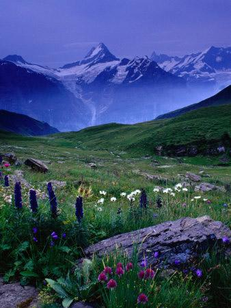 Alpine Flowers of Switzerland