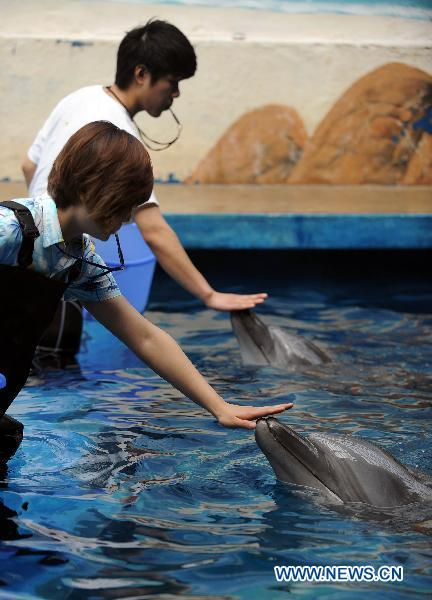 Animal trainers touch dolphins at an aquarium in Fushun, northeast China's Liaoning Province, July 6, 2010. Dolphins at the aquarium in Fushun are trained to play with autistic children as an assistant therapy when the interactive center of the aquarium is to open in September.(Xinhua/Yao Jianfeng)