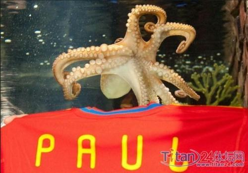Paul, the psychic octopus, was awarded honorary citizenship of the Spanish town of Carballino on Thursday, after correctly predicting Spain's win in the World Cup final.