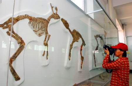 Tianyu Museum of Nature in Pingyi County,Shangdong province.[Photo source: www.baidu.com]