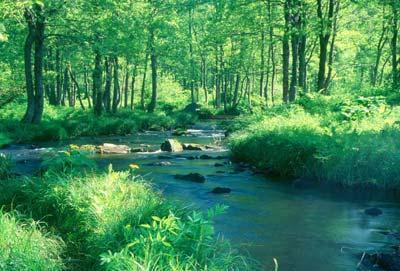 美丽地球风景森林
