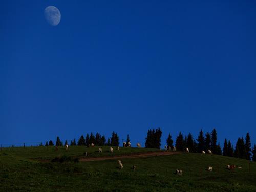 草原的夜色_能看见星星的地方 草原夜色多么美