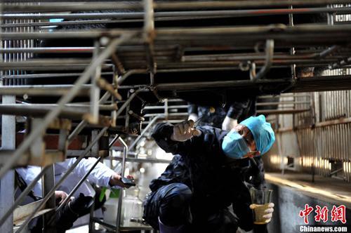 """2月22日,归真堂""""黑熊养殖基地""""对外开放,这个备受关注的""""开放日""""吸引了来自海内外百余名媒体记者。图为""""活熊取胆""""过程。王东明摄"""
