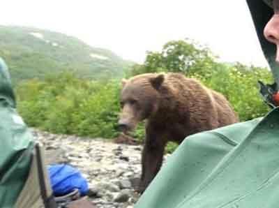 """在大灰熊""""研究""""这群游客时,他们别无选择,只能坐在原处一动不动"""