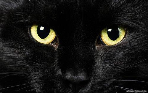 新型猫科动物麻疹病毒可导致肾脏出现病变