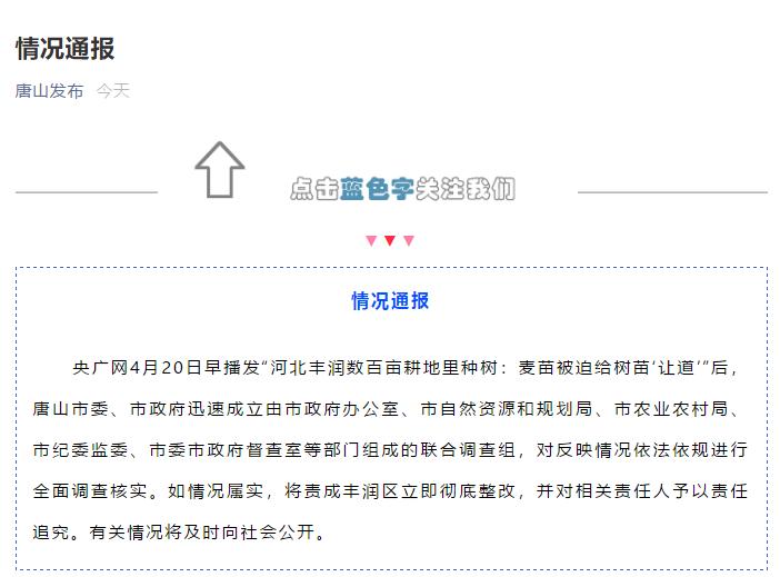 """唐山官方回应""""河北丰润数百亩耕地种树"""":组成联合调查组对情况进行全面调查"""