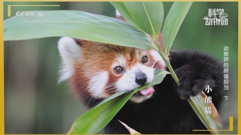 《科学动物园》 20201128 动物界的颜值担当 下