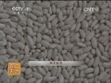 蔬菜种植农广天地,冷棚菜豆栽培(20140324)