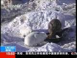 [视频]黑龙江:兔年壮兔胆 兔狗相处也融洽