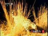天生杀手之夜幕下 自然传奇20110118