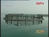 [农广天地]深海抗风浪网箱养鱼(20110927)