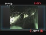 动物猎杀现场(六)[自然传奇] 20120228