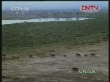 《人与自然》 20120412 自然发现——自然影片拍摄纪实(中)