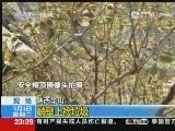 实拍:华山环卫工悬崖峭壁上捡垃圾