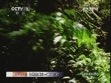 《人与自然》 20120525 自然发现 自然的威力——飓风(上)