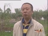 黑龙江李柏林海参养殖:投石入海生财源