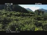 《茶叶之路》 20120718 第十集 红茶的故乡