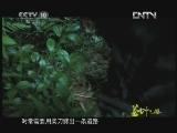 《茶叶之路》 20120724 第十六集 绝壁寻茶(上)