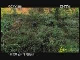 《茶叶之路》 20120725 第十七集 绝壁寻茶(下)