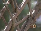 童鸣初苗木种植:十年树木聚财富