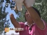吴军伶养鸡:我是一只萤火虫