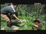 《茶叶之路》 20120817 第四十集 神农野茶(上)