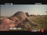 《自然传奇》 20120827 动物大解剖 河马