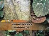 李明焱食用菌研究:山谷里种出发财菌
