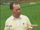 王加勇水稻种植:边陲古镇的财富米
