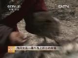 海归女乔婉珊牦牛养殖:在一撮牛毛上抓出的财富