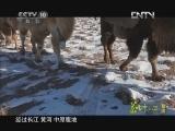 《茶叶之路(精编) 第一集 武夷茶事》 20120929