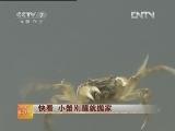 稻田养蟹增收:小蟹刚醒就搬家