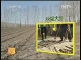 [农广天地]秋播大蒜如何出好苗(20121015)