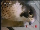 《自然传奇》 20121104 动物生存奥秘 (1)