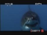 《自然传奇》 20121111 动物生存奥秘(8)