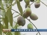 何世勤油橄榄生财有道:树里的液体黄金