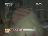梁秋波竹鼠养殖致富经:暴利的背后