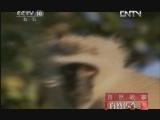 《自然传奇》 20121130 自然故事 街头顽猴