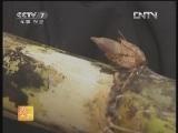 农广天地,甜城18号果蔗栽培技术