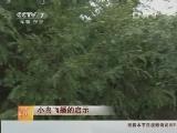 红豆杉种植科技苑,小鸟飞播的启示