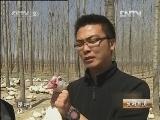 吴百燕鸳鸯鸭生财有道,林下养出挣钱的鸳鸯鸭