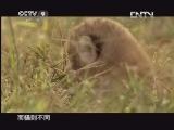 [子宫日记]新生的幼狮