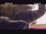 [子宫日记]可怕的狮吼