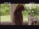 [子宫日记]母猫早孕反应