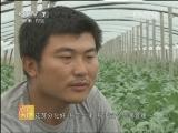 西瓜栽培农广天地,西瓜工厂化育苗技术_致富经
