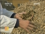 玉米秸秆基质生产技术