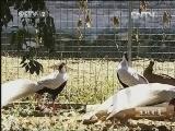 陈培绕珍禽养殖生财有道,一个农民的珍禽园